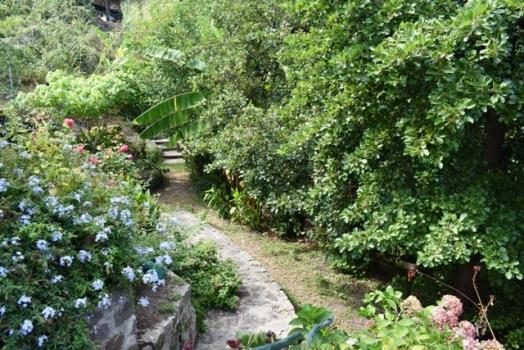 giardino con vialetto d'ingresso