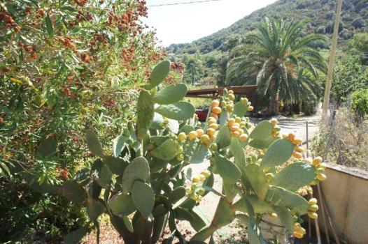 Garten Hinterseite (10)